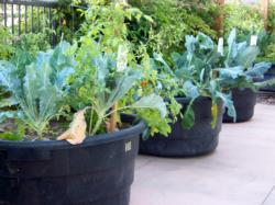 Indio Senior Center Garden